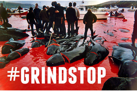 Bild zur Petition mit dem Thema: Stop whale slaughter on Faroe Islands